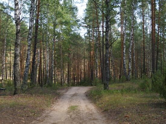 Жителя Марий Эл осудили за незаконную рубку леса более чем на 1 млн рублей