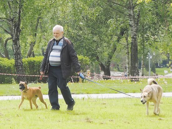 Собаки могут помочь в поисках запрещенного зелья