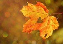 В ближайшую неделю в Новосибирске будет очень приятная погода, и начнется она прямо сегодня, 15 октября.
