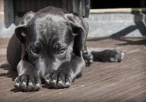В Кировской области объявлено вознаграждение за информацию о судьбе собак