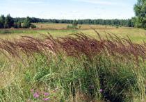 Пока на подмосковных полях завершается битва за урожай, правительство области подготовило закон, позволяющий выделять фермерам более 10 гектаров свободных земель