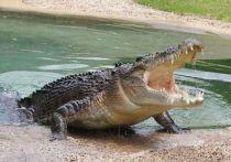Ученые СПбГУ изучили устройство и начинку мозговой коробки крокодила