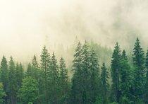 В Кабардино-Балкарии спасатели отыскали четырех подростков, которые заблудились в лесу