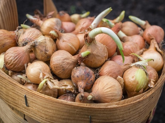 Названы овощи, которые следует сажать в октябре для раннего урожая