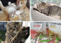 Волонтеры группы «Лапы в руки» принесли в этот день в ветклинику 30 животных: 29 котов, кошек и котят и одного щенка