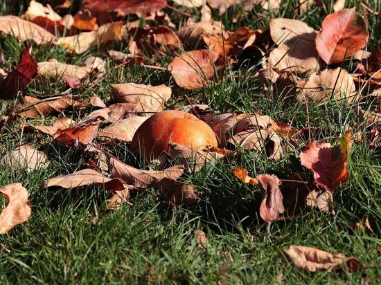 Управление Россельхознадзора по Нижегородской области и Республике Марий Эл рассказало нижегородским садоводам, как правильно утилизировать ботву, листву и падалицу в конце дачного сезона