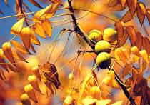 О пользе плодов не говорит разве что ленивый