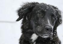 Бешенство или отравление: дикие собаки с пеной на морде беспокоят жителей Надыма