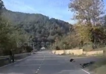 В Сочи из-за собаки пострадал велосипедист