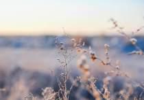 В ночь на вторник, 19 октября, температура воздуха в ночное время опустится до -4 градусов