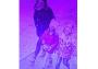 Обвиняемая в убийстве третьеклассницы из Вологды душевнобольная женщина Ульяна Ланская незадолго до преступления пыталась увести из детского сада  двух маленьких детей