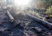 В Петровск-Забайкальском районе в 25 км от поселка Баляга двое забайкальцев незаконно спилили 52 лиственницы и 174 сосны