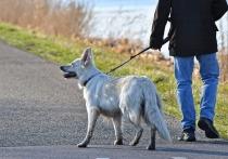 Правительство одобрило законодательную инициативу подмосковных депутатов, которые подготовили ряд поправок в закон «Об ответственном обращении с домашними животными»