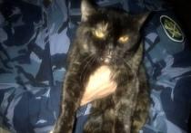 В одной из колоний Ивановской области поймали кота, который пытался пронести наркотики