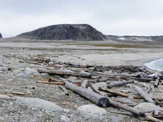 По 500-летним корягам отследили потепление в Арктике