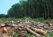 Рослесхоз против Селезнева: в Усть-Луге начали рубить деревья под газохимический комплекс
