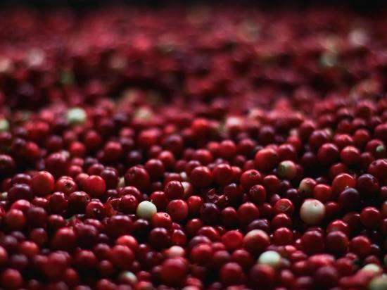 Названы полезные свойства клюквы - суперфуда осени