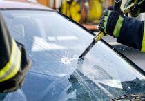 На автомобиль Renault упало дерево под Выборгом, есть пострадавшие