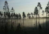На заработки 32-летний Николай Артемьев из родного Прибайкалья выехал в Мухоршибирский район в середине июня 2020 года вместе с односельчанином, который тоже собирался подзаработать на лесозаготовке