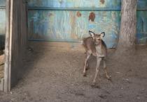 Уже скоро посетители читинского зоопарка смогут увидеть еще несколько новых обитателей