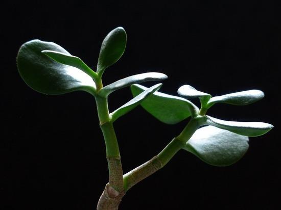 Существуют растения, способные пережить редкий полив, недостаток подкормки и плохое освещение, сообщил на своем сайте известный садовод Дэвид Домони