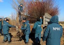 Сотрудники МЧС ДНР высадили у обочин автомобильной трассы Донецк-Мариуполь порядка 800 кустарников