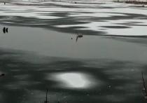 Зоозащитники призвали ямальцев не помогать лебедю на замерзающем озере Надыма