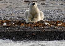 Бурение геологических скважин в море Лаптевых впервые провели сотрудники Арктического научного центра компании «Роснефть»