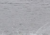 В Каспийском море в 100 раз упал улов воблы