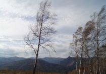 20 обращений о последствиях порывистого ветра зафиксировали в Красноярске