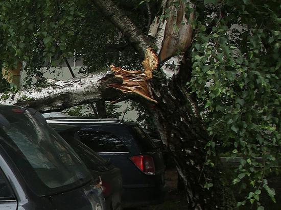 Жуткий несчастный случай лишил семью жителей Талдомского городского округа единственной долгожданной внучки