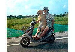 Собак в Подмосковье можно вывозить без проблем