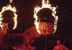 Актерам запретили играть с огоньком