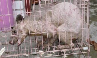 В Китае поймали живого «йети». ФОТО