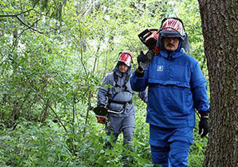 Находиться в лесу, не опасаясь клещей, смогут теперь профессиональные лесничие