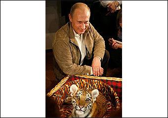 Тигрица легкого поведения