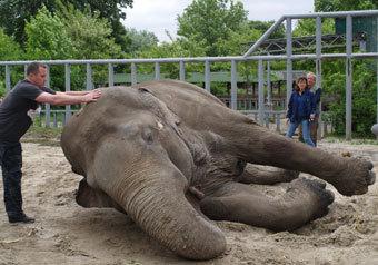 """Спецкор """"МК"""" расследовала причины массовой гибели животных в киевском зоопарке"""