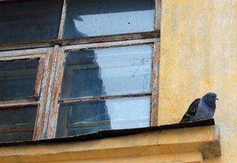 Лишиться жилплощади из-за любви к голубям пришлось семье из Сочи