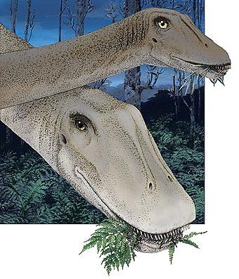 Морды взрослых и юных динозавров отличались во избежание конкуренции
