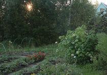 Как посадить правильный огород, зарядив его положительной энергией