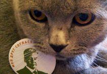 Новое явление избирательной кампании: коты - за Собянина