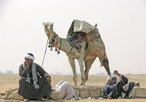 Верблюд на квадроцикле