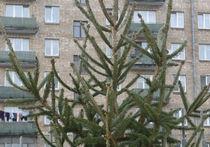 За незаконно срубленную елку штраф может достигнуть 5 тысяч рублей