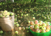 Яблочный спас шубу припас