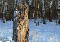 Лес  в опасном «падеже»
