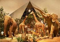Муза музея Дарвина