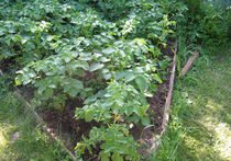 Как из сорняков сделать удобрения