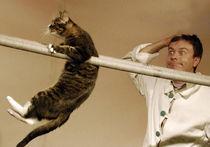 Всемирный день кошек: котэ поют и пляшут на ВИДЕО