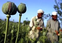 Экс-генсек ООН лоббирует наркомафию?
