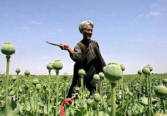 От афганского героина гибнет в сто раз больше людей, чем от терактов